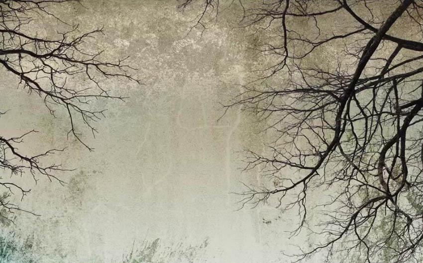Фотообои Ветви на потолке