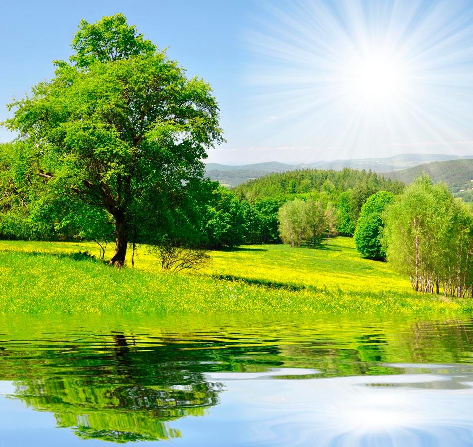 Фотообои Солнце, вода, дерево