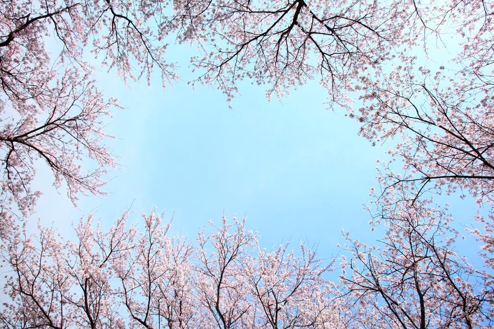 Фотообои Верхушки деревьев, цвет