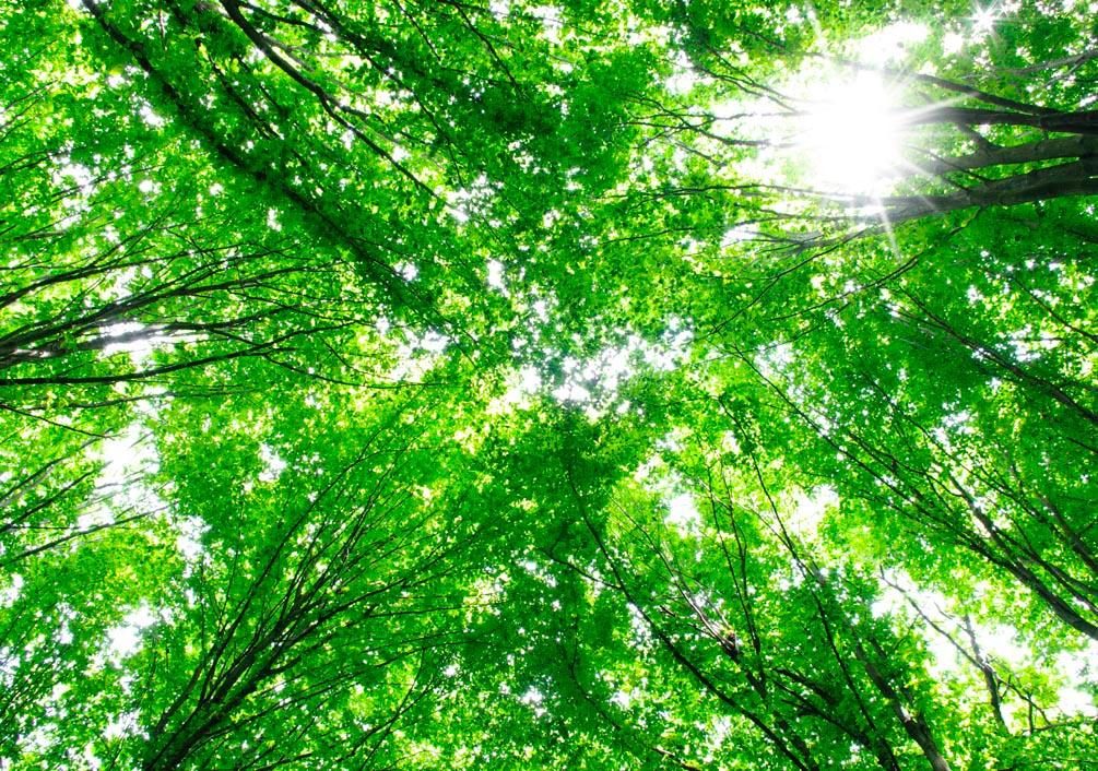 Фотообои Деревья, свет