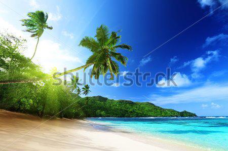 Фотообои Пляж, пальмы