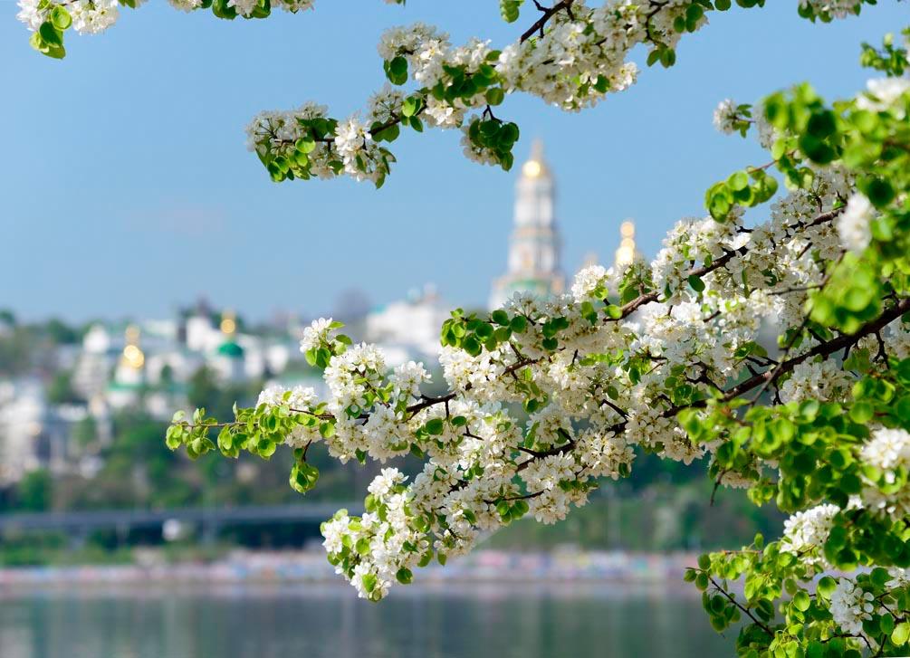 Фотообои Яблочный цвет