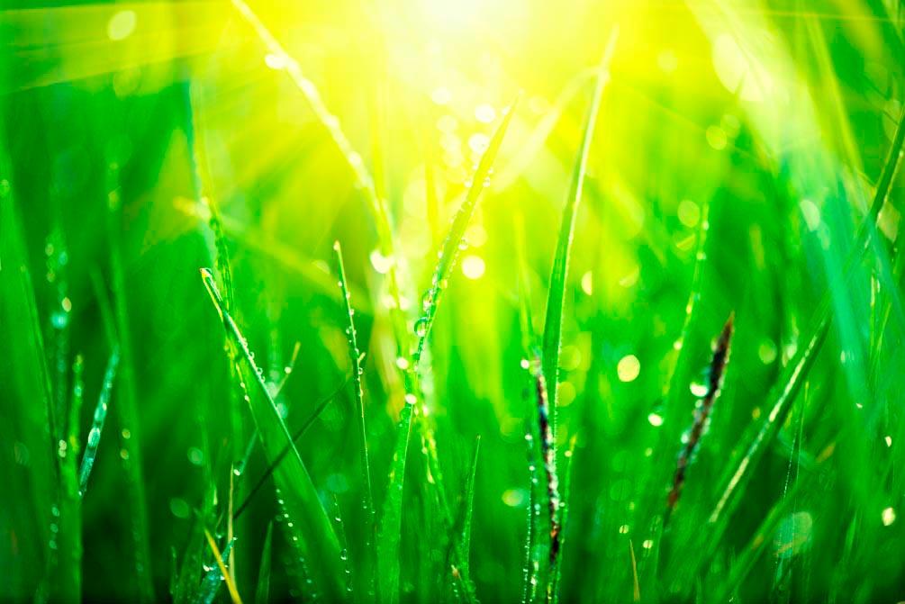 Фотообои На траве роса