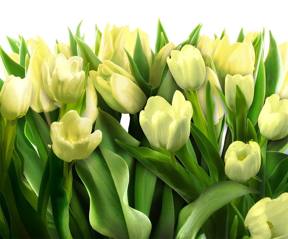 Фотообои в кухню Тюльпаны
