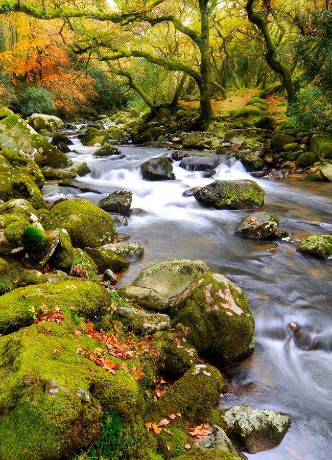 Фотообои Камни, мох