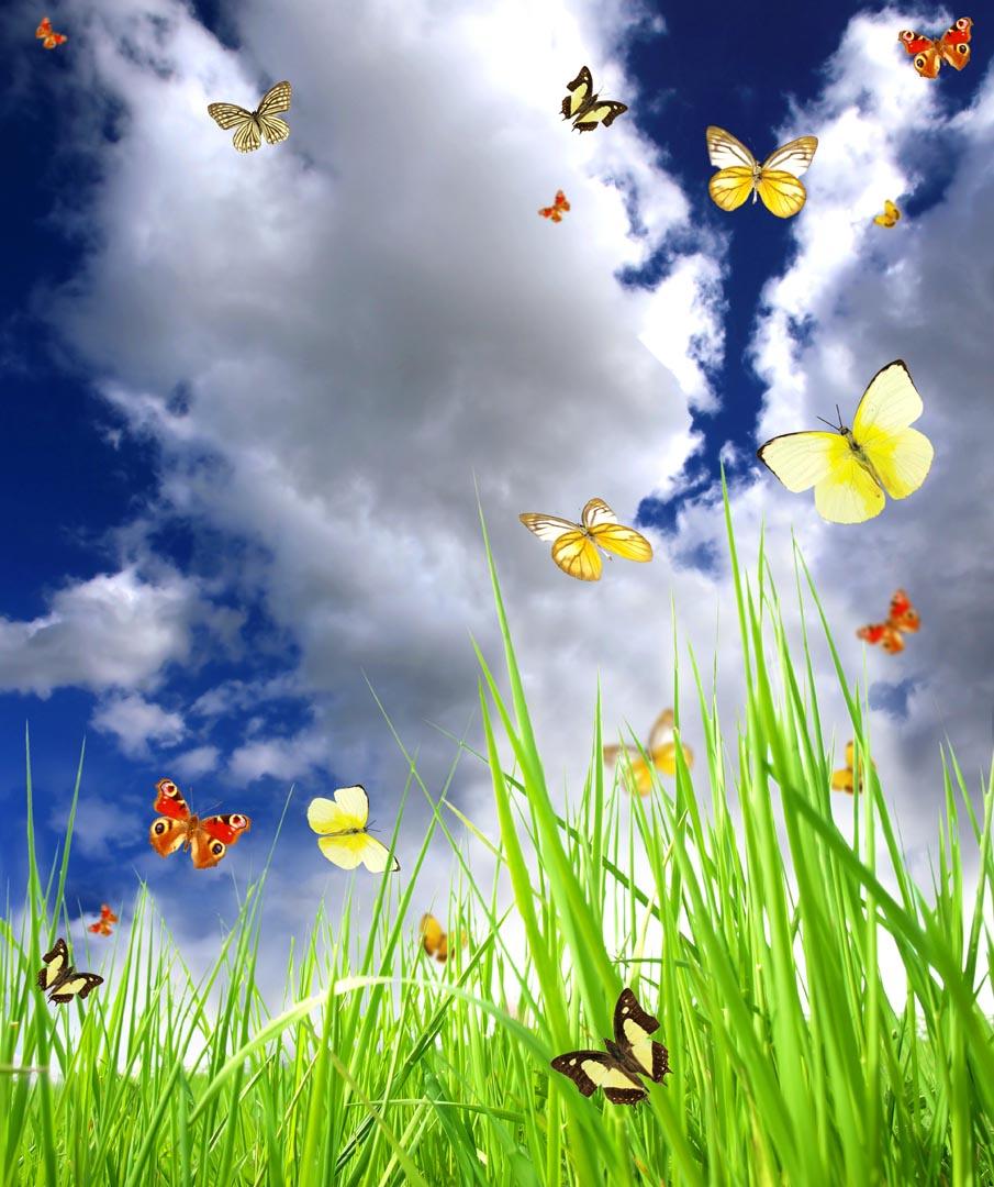 Фотообои небо с бабочками над травой