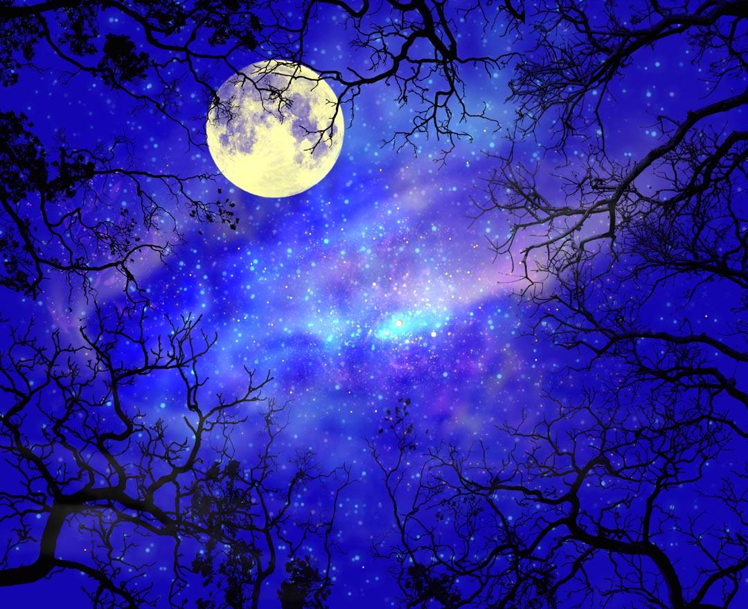 Фотообои луна на небе в лесу