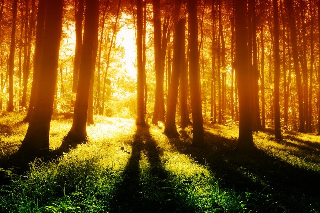 Фотообои утро в лесу