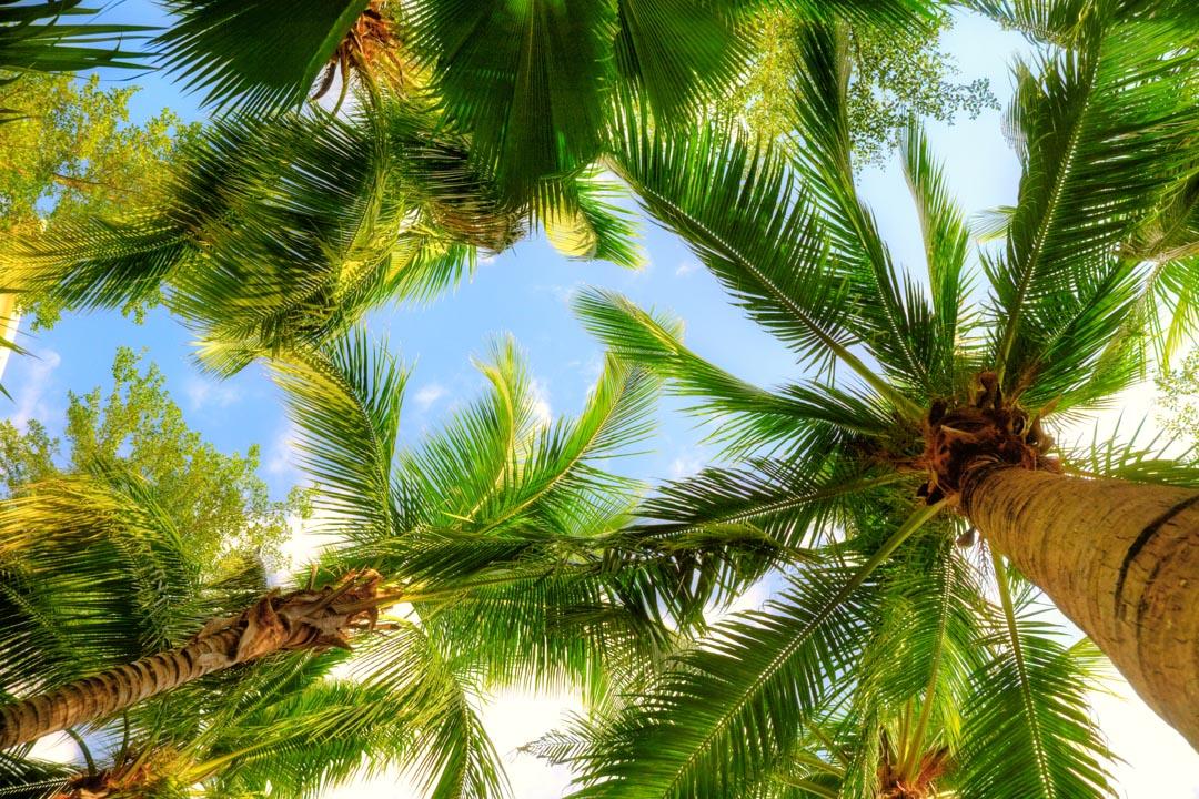 Фотообои под пальмами