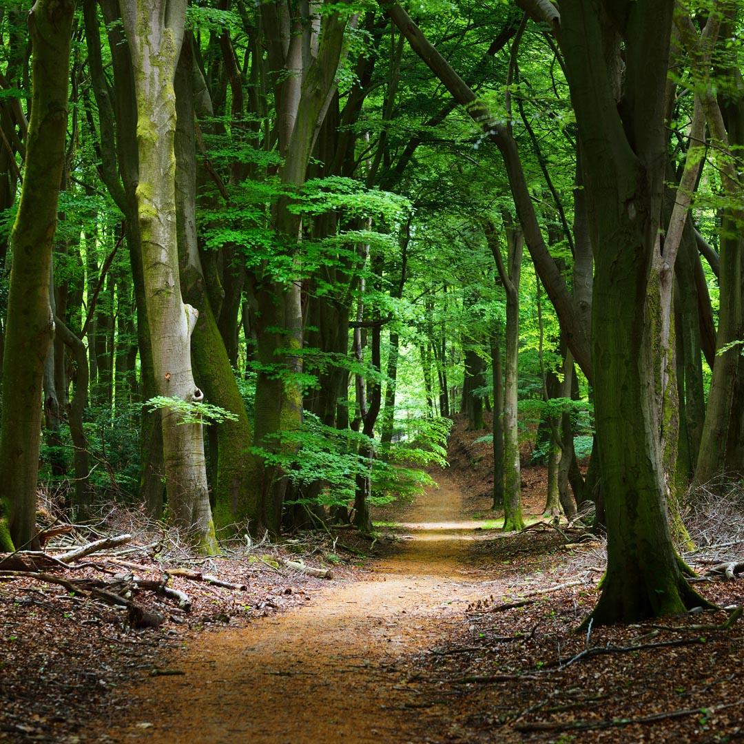 Фотообои дорога в темном лесу