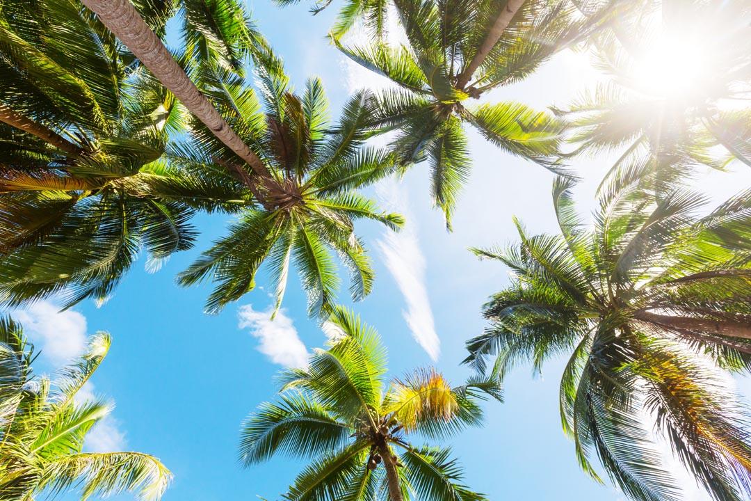 Фотообои верхушки пальм