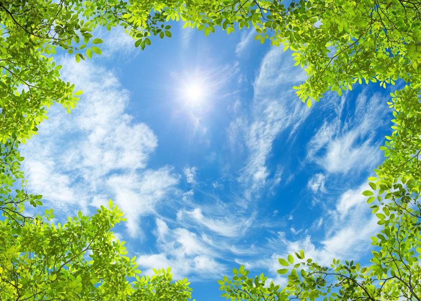 Фотообои Ветви и небо потолок