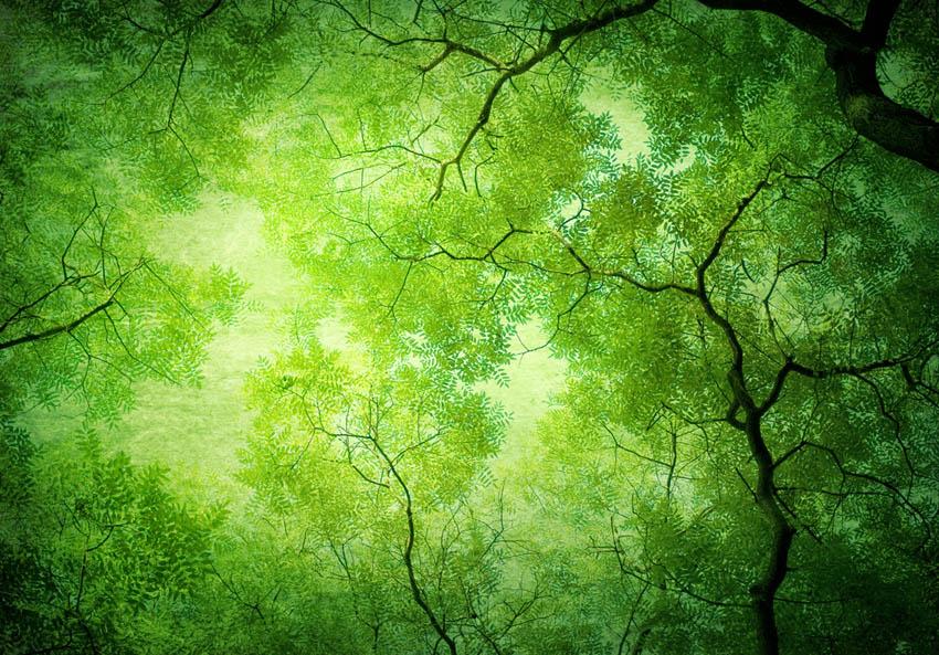 Фотообои Вид на дерево снизу