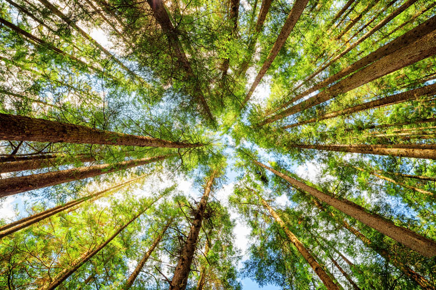 Фотообои лес для потолка