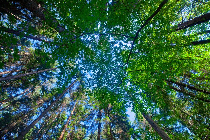 Фотообои деревья для потолка