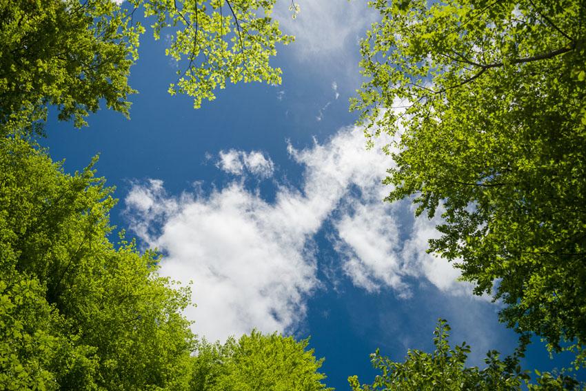 Фотообои Ветви и небо на потолок