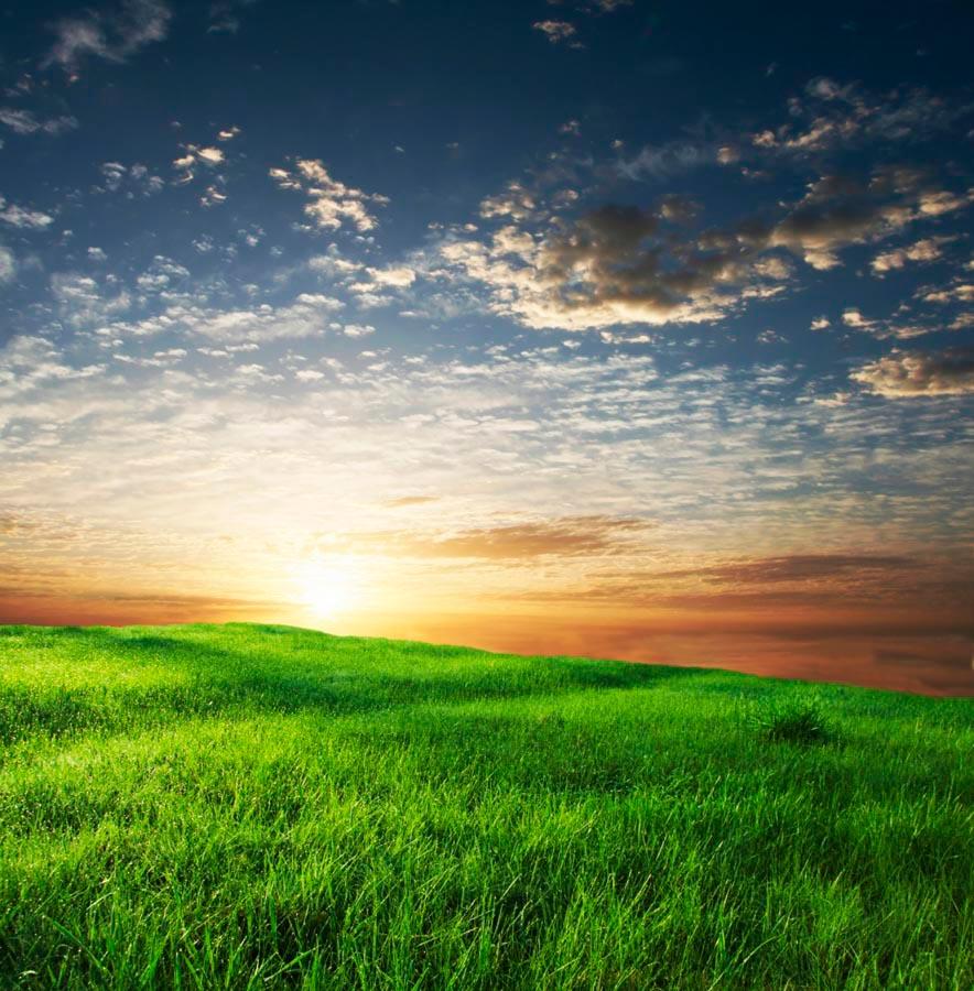 Фотообои Трава, небо