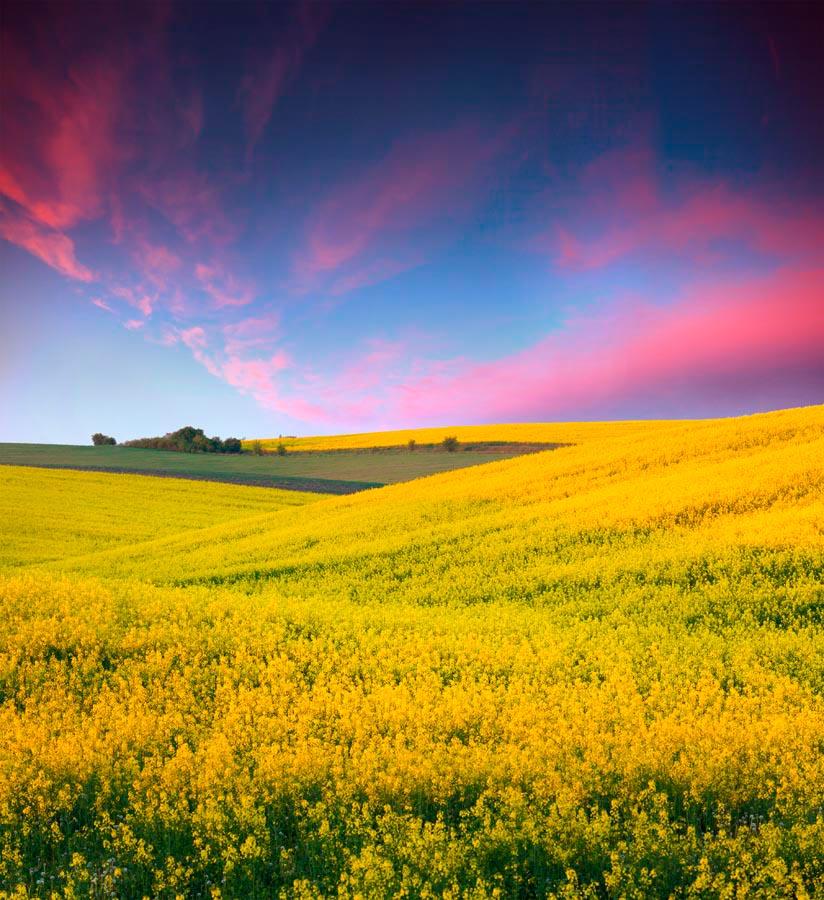 Фотообои Полевые цветы