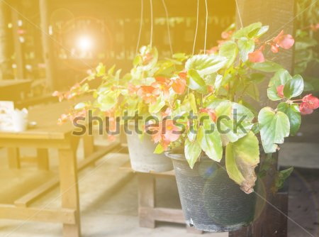 Фотообои Столик, цветы