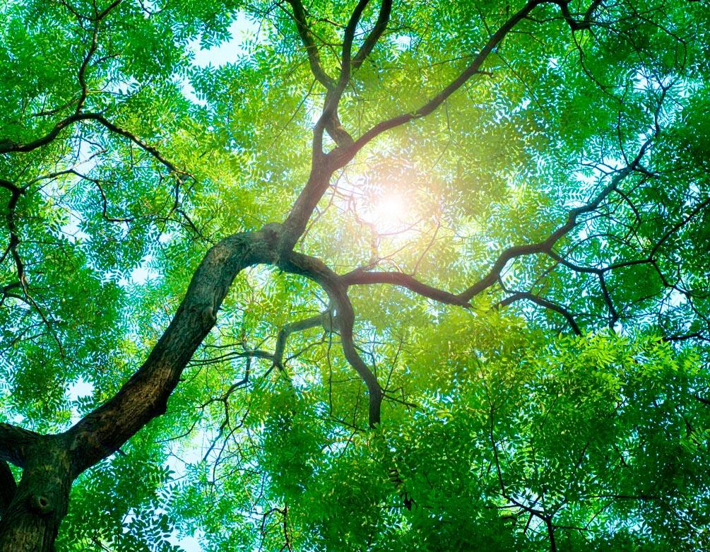 Фотообои Дерево, солнце