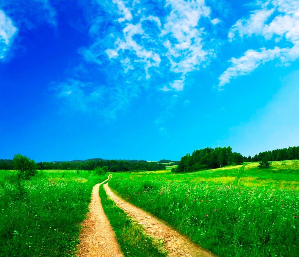 Фотообои Дорога в поле