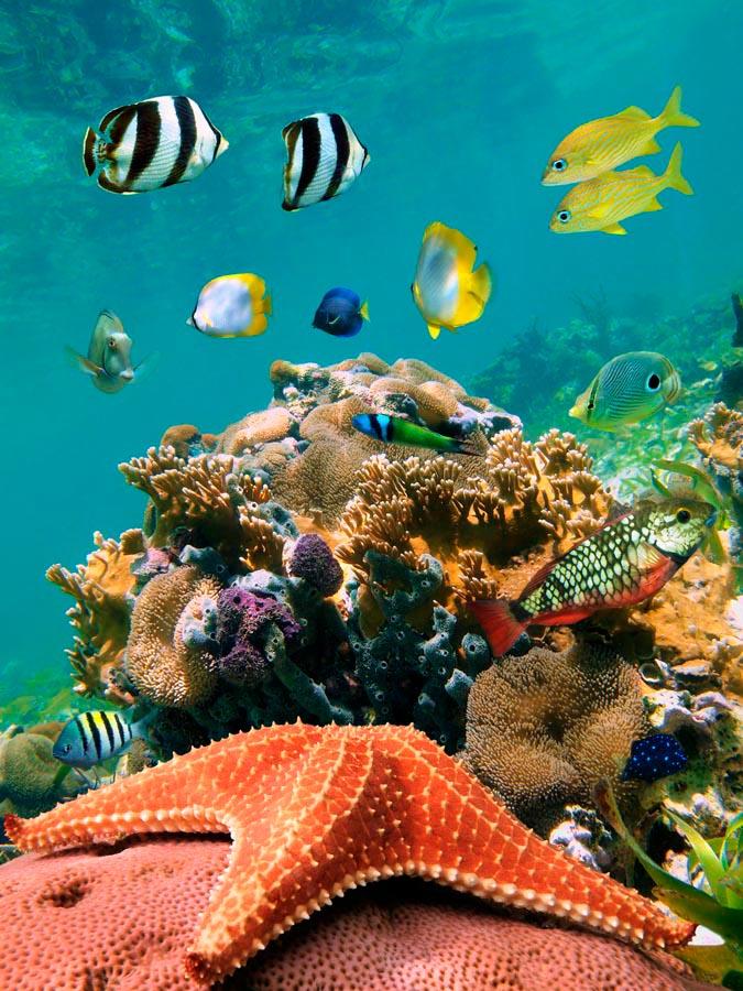 только повесили картинки моря на телефоне поклонская свежие