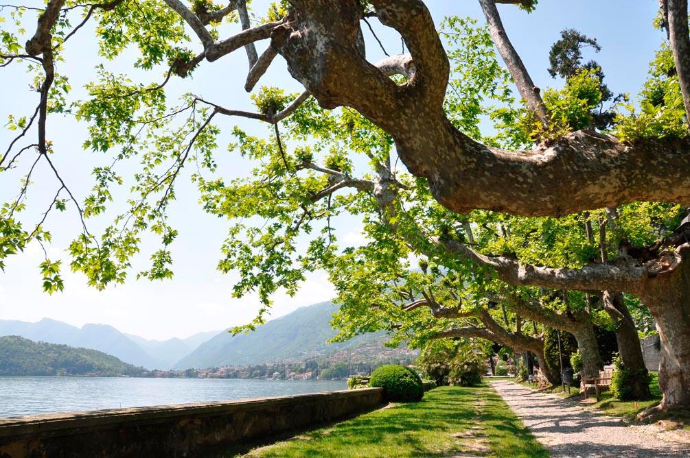 Фотообои Набережная, деревья