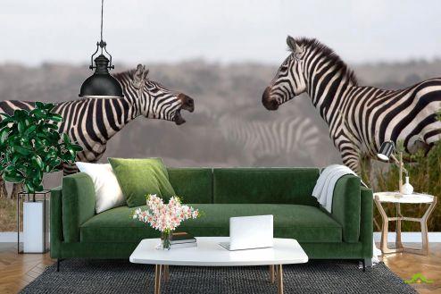 Зебры Фотообои Общение зебр