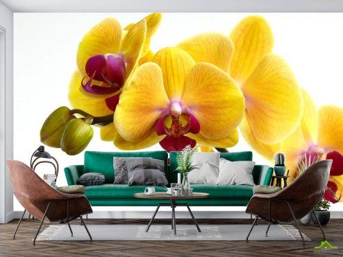 Орхидеи Фотообои желтые орхидеи на белом фоне