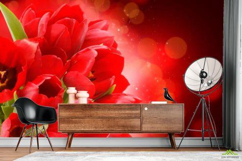 Тюльпаны Фотообои Алые тюльпаны