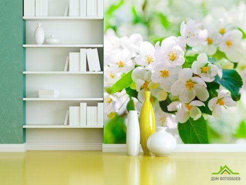обои Цветы Фотообои Абрикосовые маленькие цветы
