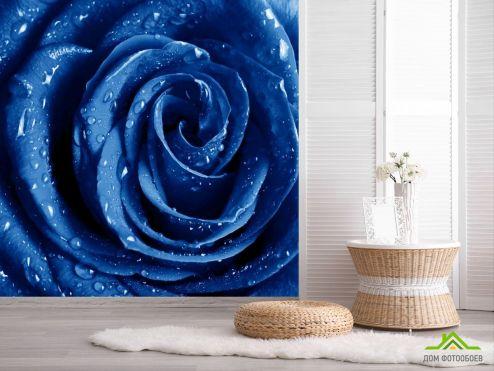 Розы Фотообои синяя роза с каплями