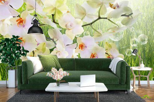 Орхидеи Фотообои белая орхидея на фоне травы