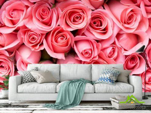 Розы Фотообои яркие розовые розы