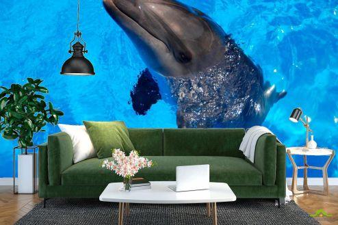Дельфины Фотообои Резвый дельфин купить