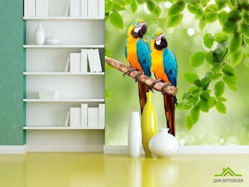 обои Птицы  Фотообои Попугаи