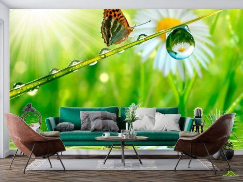 Животные Фотообои Бабочка над водой