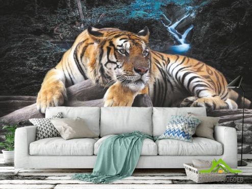 Животные Фотообои Тигр
