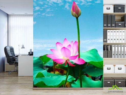 обои Цветы Фотообои Бледно-розовые кувшинки