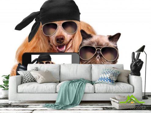 Фотошпалери Тварини Фотошпалери кіт з собакою роблять селфи