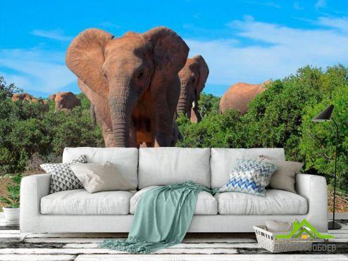 обои Слоны Фотообои Стадо слонов