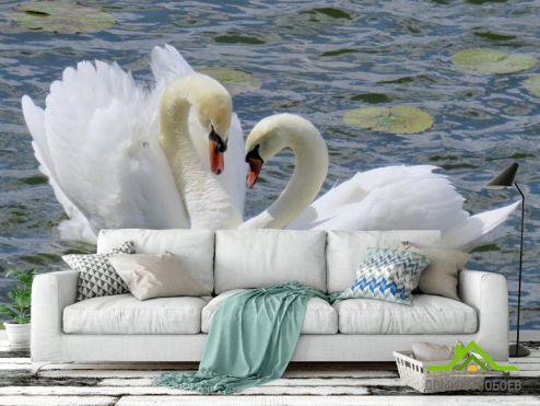 обои Птицы  Фотообои два лебедя