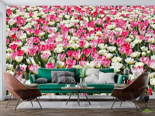 Тюльпаны Фотообои Поле разноцветных тюльпанов