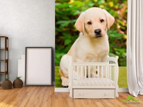 обои Собаки Фотообои Милый щенок