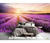 Фотообои Закат в лавандовом поле