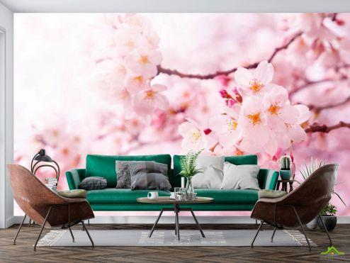 Цветы Фотообои Весной цветущая вишня купить