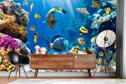 Рыбы и море Фотообои Рыбки на морском дне