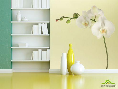 обои Орхидеи Фотообои белая орхидея на бежевом фоне