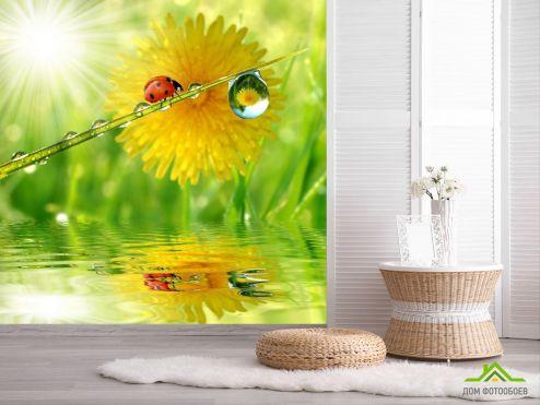 обои Природа Фотообои божья коровка на листике