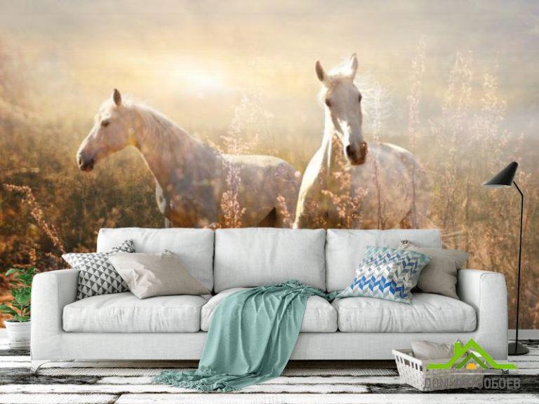 Фотообои Лошадки